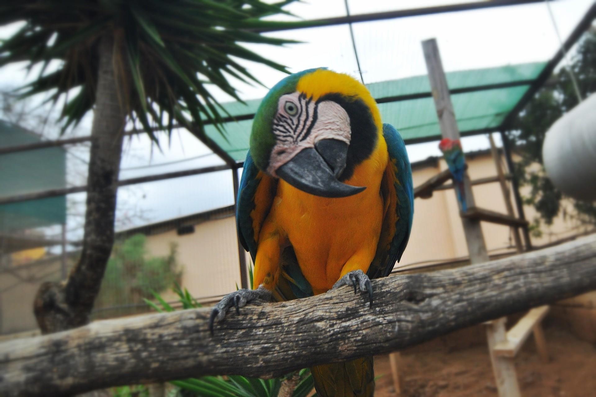 Fauna_parrot