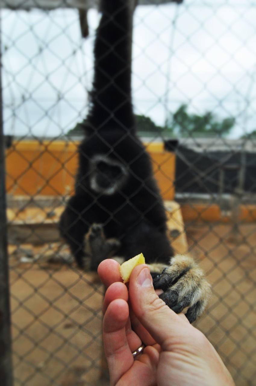 Fauna_monkey