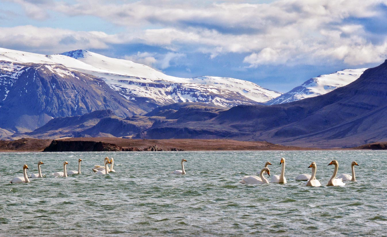 Icelandia (24)