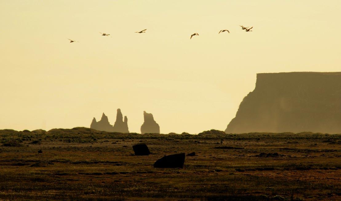 Icelandia (36)